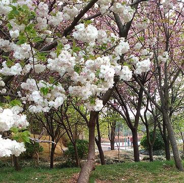 禹州森林植物园的图片