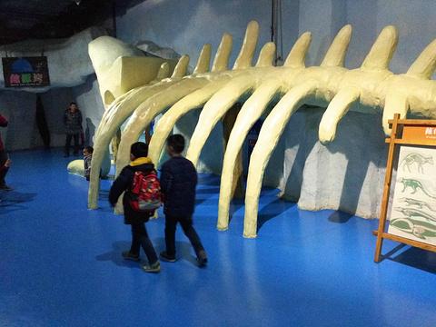 杭州长乔极地海洋公园旅游景点攻略图