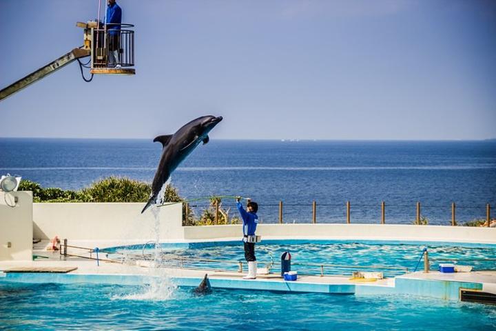"""""""海水水质非常好, 水中海参、鱼类非常多_冲绳美丽海水族馆""""的评论图片"""