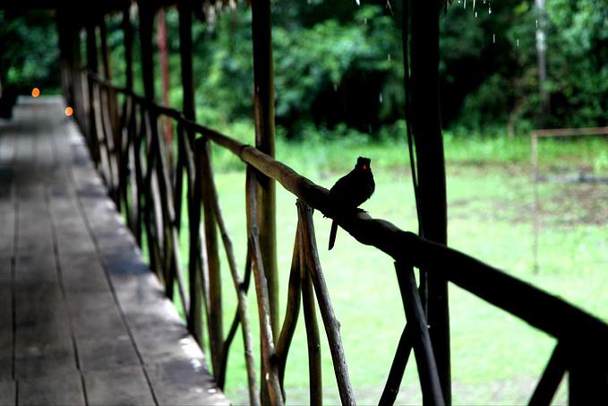 Muyuna Lodge图片