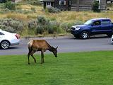 贾斯珀国家公园旅游景点攻略图片