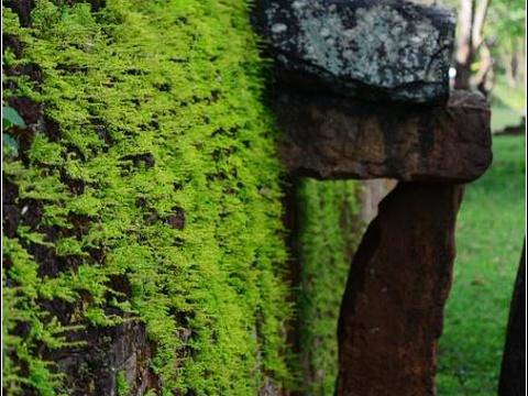 帕巴鲁寺旅游景点图片