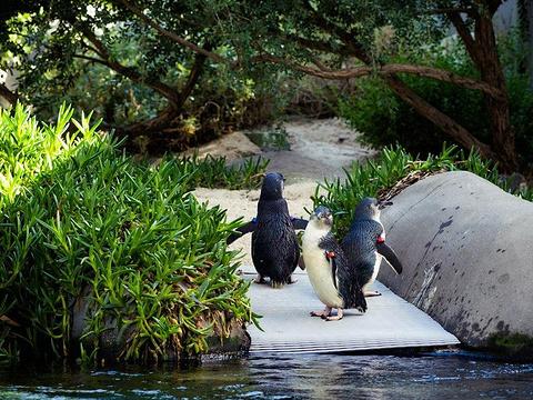 墨尔本动物园旅游景点图片