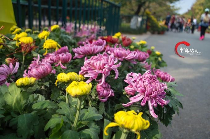 中山公园图片