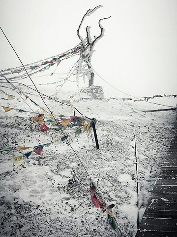 """""""...靴和一双防水的手套是在雪地中玩得尽兴的必须,特别是登上山顶栈道,往4500米纪念碑前进的那一段_石卡雪山""""的评论图片"""