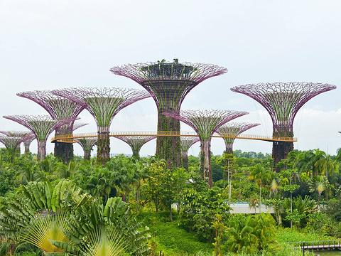新加坡滨海湾花园旅游景点图片