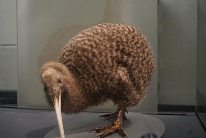 """""""展示毛利人历史文化的博物馆_奥克兰博物馆""""的评论图片"""