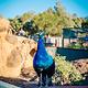 华勒比野生动物园
