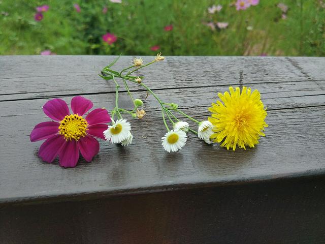 """""""各色美丽的花花🌸_长白山国际度假区""""的评论图片"""