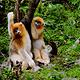 观音山大熊猫自然保护区