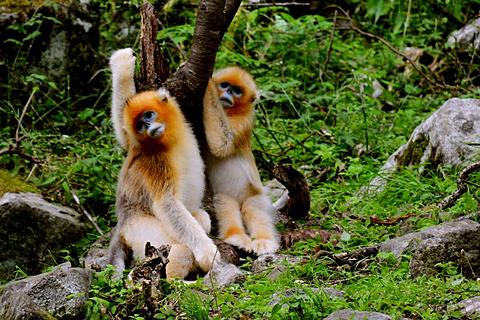 观音山大熊猫自然保护区旅游景点攻略图