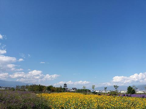大理云上花海旅游景点攻略图