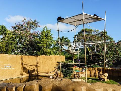 火奴鲁鲁动物园旅游景点图片