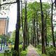 台中经国绿园道