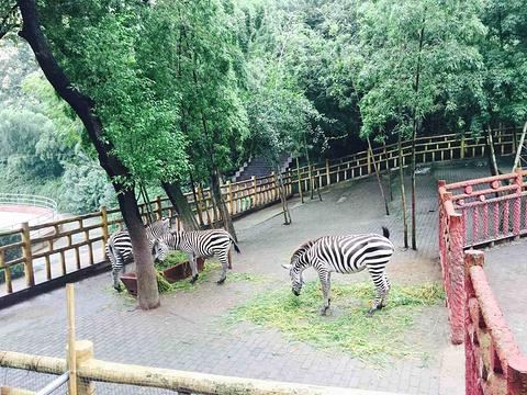 赭山公园旅游景点图片