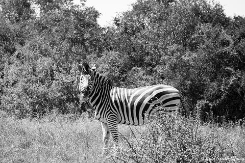 阿多大象国家公园