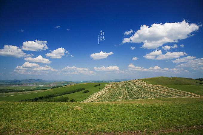 呼伦贝尔大草原图片