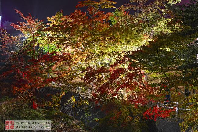 中野枫叶山图片