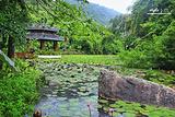 亚龙湾森林公园兰花谷