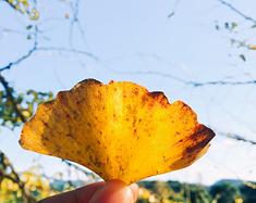 灵川,小平乐。我与秋天有个约会。
