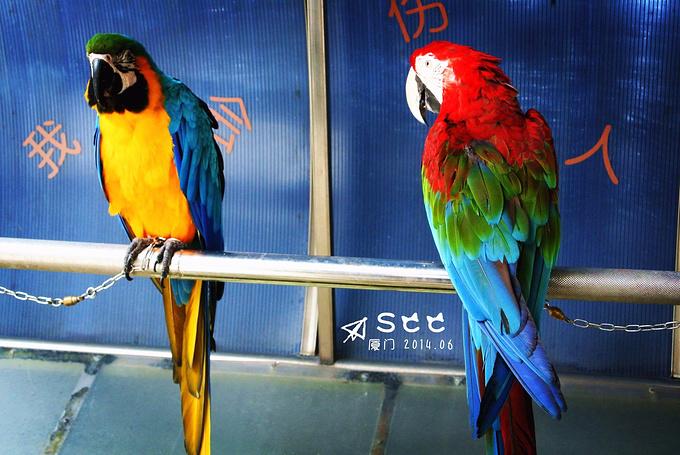 百鸟园图片