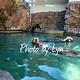 西雅图水族馆