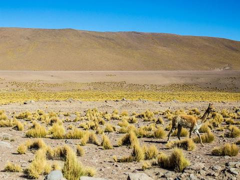 EI Tatio Geysers旅游景点图片