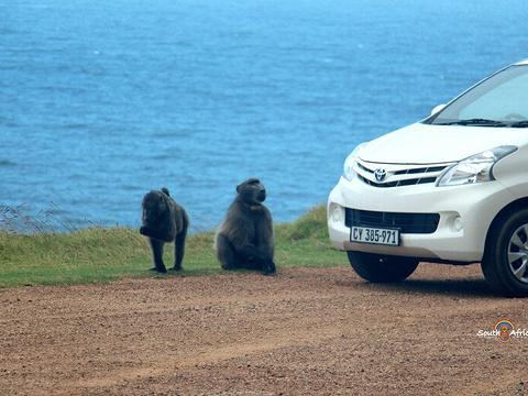 开普角旅游景点图片