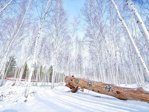 白桦林旅游景点图片
