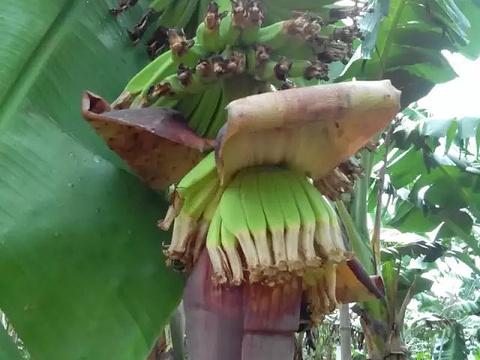 菠萝的海旅游景点图片