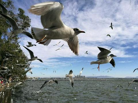 海埂公园旅游景点攻略图