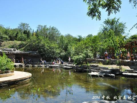 北宫国家森林公园旅游景点图片