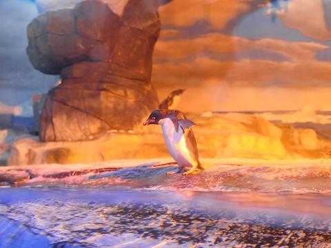成都海昌极地海洋世界旅游景点图片