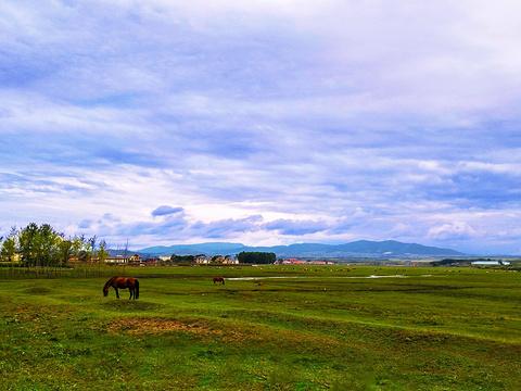 红山军马场旅游景点图片