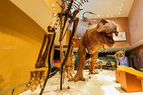 上海自然博物馆的图片