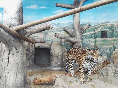 天王寺动物园旅游景点图片