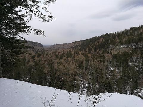 长白山谷底森林旅游景点图片