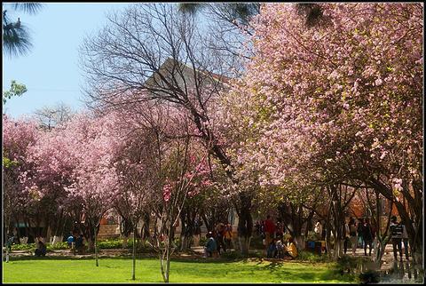 云南大学的图片