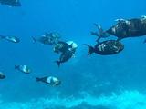 蓝梦岛旅游景点攻略图片