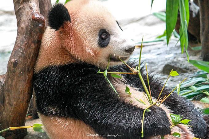 长隆野生动物世界图片