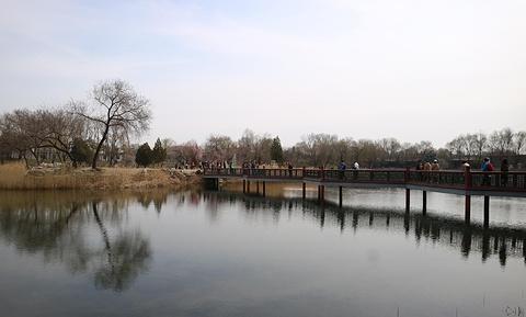 绮春园的图片