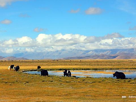 冈底斯山脉旅游景点图片