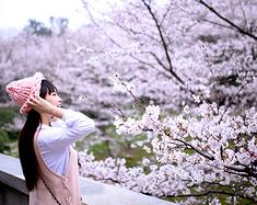 【笑妍日记之无锡——去看那落樱缤纷】岁月静好,花开相依