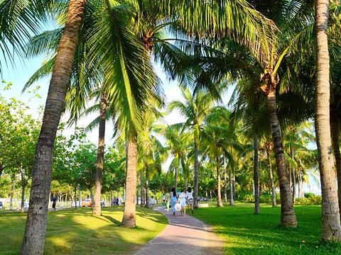 椰梦长廊旅游景点图片