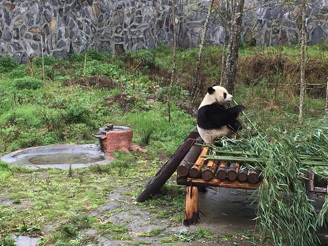 熊猫园图片