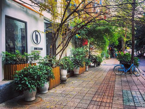 泡桐树街旅游景点图片
