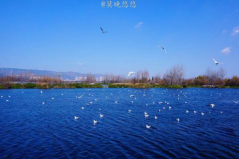 滇池的图片