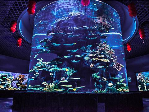 多彩贵州城极地海洋世界旅游景点图片