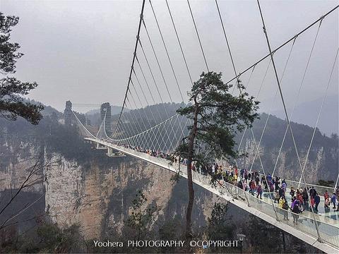 张家界大峡谷玻璃桥旅游景点图片