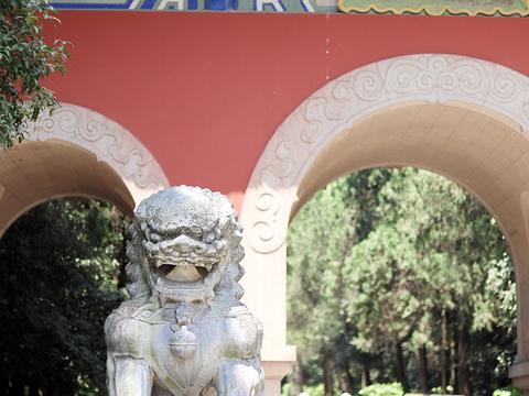 灵谷景区旅游景点图片
